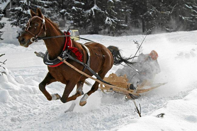 horse, snow, Zakopane