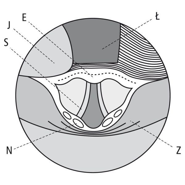 Krtań wlaryngoskopii bezpośredniej