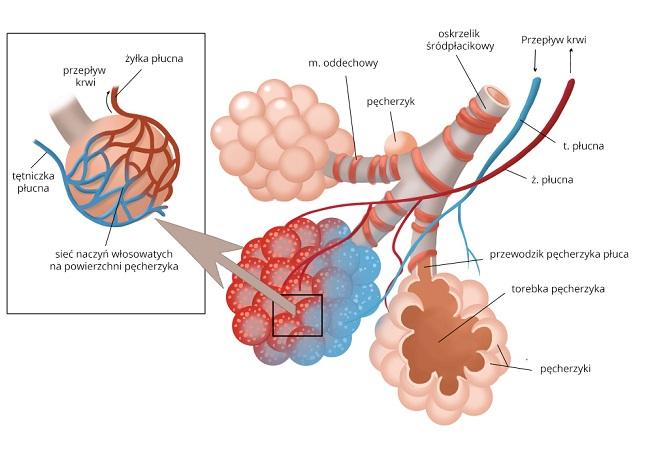 Pęcherzyk płucny