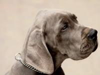 Pies Dla Alergika Alergie Medycyna Praktyczna Dla Pacjentów