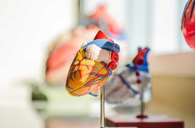 model serca