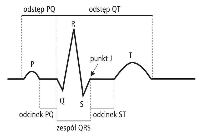 Krzywa EKG