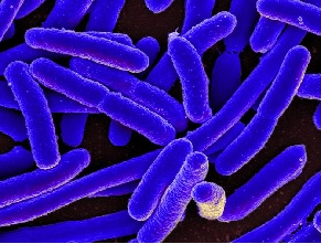 e coli svorio netekimas