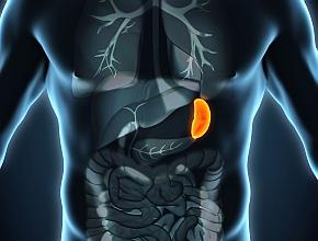 Powiększenie śledziony Hematologia Medycyna Praktyczna Dla Pacjentów