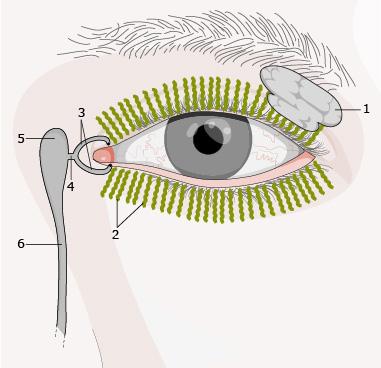 Budowa układu łzowego istruktura filmu łzowego
