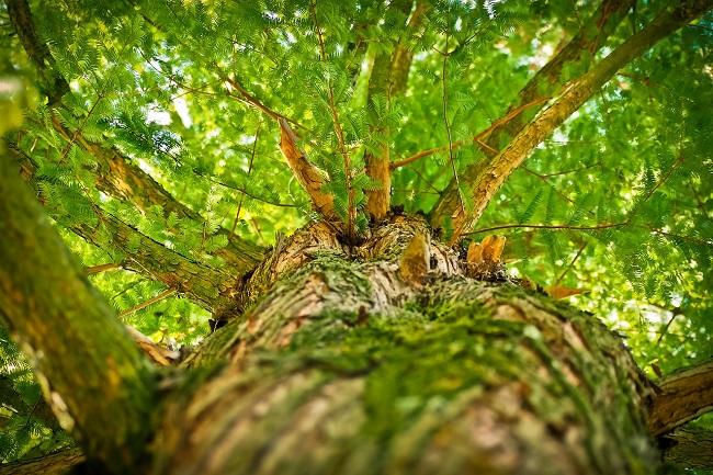 drzewo, kleszcze