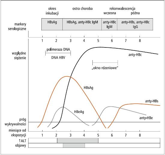 Serologiczne markery ostrego zakażenia wirusem zapalenia wątroby typu B