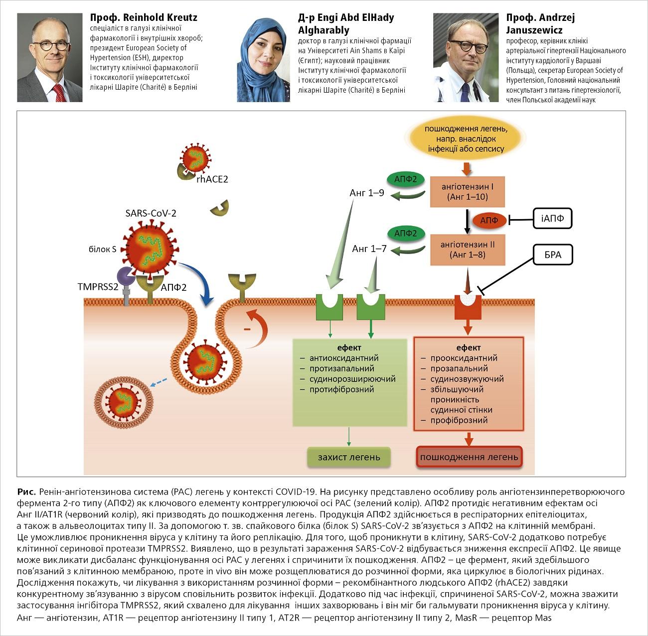 Ренін-ангіотензинова система (РАС) легень уконтексті COVID-19
