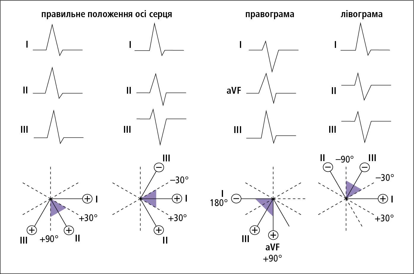 Оцінка положення електричної осі серця