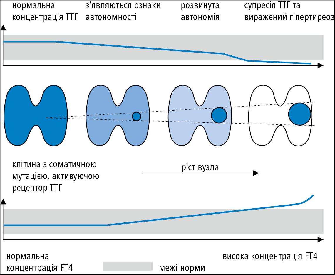Розвиток автономного вузла щитоподібної залози