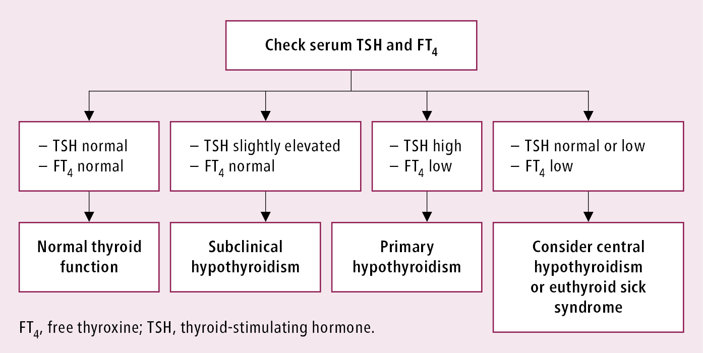Hypothyroidism Thyroid Gland Diseases Endocrinology Diseases