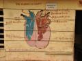 Kardiolog wAfryce