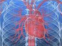 Fizjologia serca
