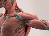 Zespół uciskowy górnego otworu klatki piersiowej