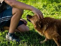 Zarażenie tasiemcem psim