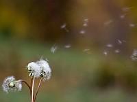 Jak badany jest stopień stężenia alergenów