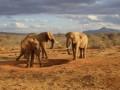 Szczepienia przed wyjazdem do Afryki Wschodniej