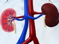 Widać postęp wleczeniu raka nerki