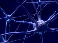 Grzybice ośrodkowego układu nerwowego