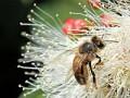 Leczenie alergii na jad owadów