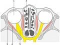 Glejak nerwu wzrokowego