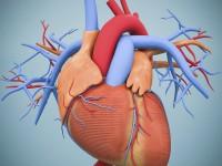 Fizjologia układu naczyniowego