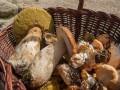 Ostrożnie cieszmy się wysypem grzybów