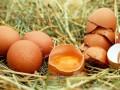 Cholesterol zjajek - nie taki straszny