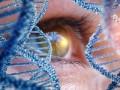 Terapia genowa wchoroideremii - badania 3 fazy