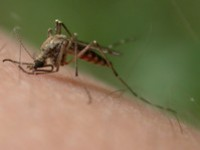 Jak stosować preparaty odstraszające owady?