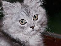 Alergia na włos kota