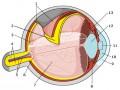 Fizjologia ipatofizjologia widzenia