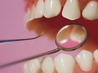 Budowa zębów iprzyzębia