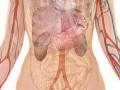 Aldosteron – hormon nadnerczowy