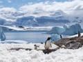 Rozwój turystyki na Antarktydzie atransmisja zakażeń zczłowieka na zwierzęta