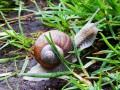 Nowy cewnik inspirowany okiem ślimaka
