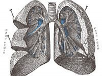 Mechanizmy POChP - co się dzieje wpłucach chorego