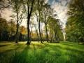 Zielone tereny wpobliżu miejsca zamieszkania kluczowe dla zdrowia płuc