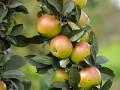 Reakcje krzyżowe uchorych zuczuleniem na alergeny pyłku roślin
