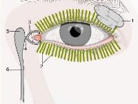Zapalenie kanalika łzowego