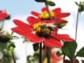 Alergia na jad owadów udzieci